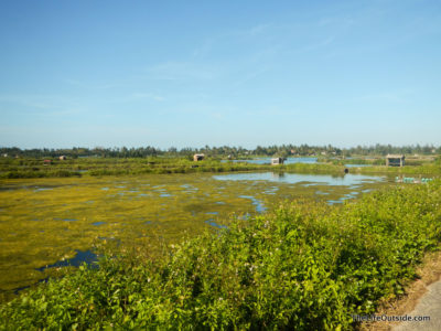 Fields of Hoi An