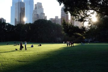 Sheap Meadow Central Park New York